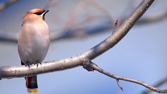 а birds_094
