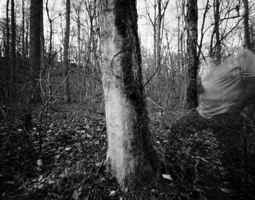 vine tree alongside creek longexposure blur ghostly blackandwhite sheet film negative 4x5 harman titan pinhole 72mmcone selfdev xtol epsonv700