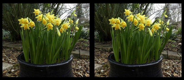 Spring is here - 3d cross-view