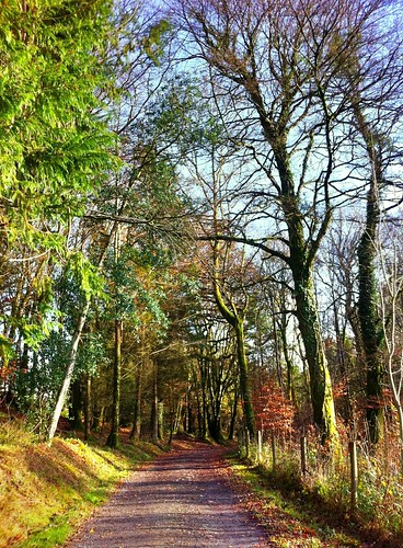 road autumn trees ireland irish fence woodland countryside path cork newmarket hff islandwood iphone4 uploaded:by=flickrmobile flickriosapp:filter=nofilter ilobsterit