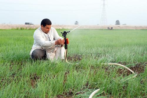 Man adjusting newly introduced modern sprinklers systems on a farm