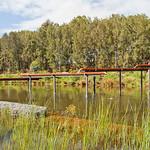 Sydney Park wetlands