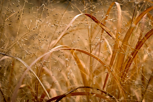 nature grass landscape golden rhodeisland fujifilm pawtuxet xm1 27mm pawtuxetriver