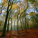 Fall at the Veluwe.jpg by Jan Paalman