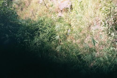 2001 pakistan 35mm weed filmcamera om1 olympusom1 flickrandroidapp:filter=none ronstravelsite nrbasham