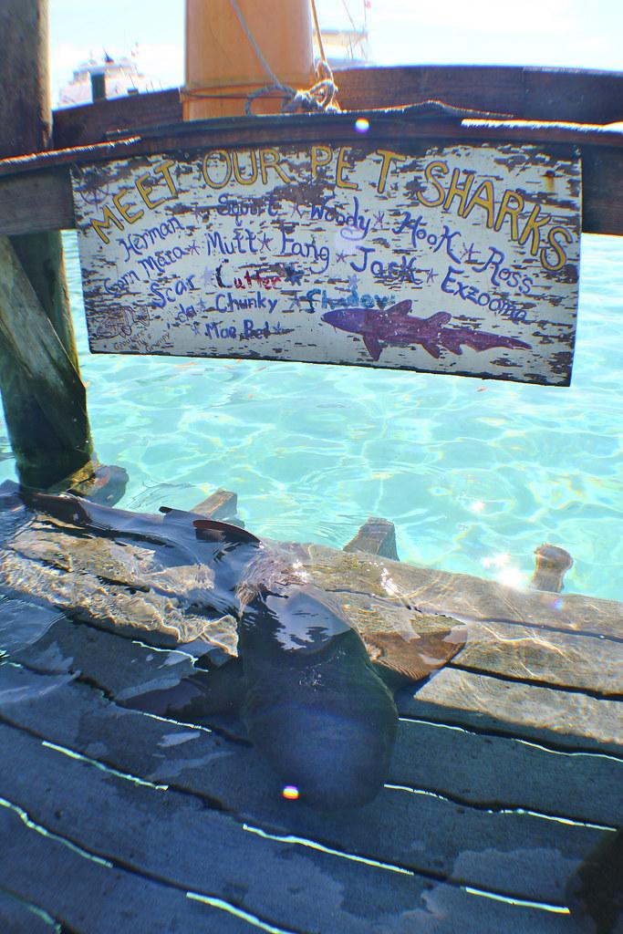 Compass Cay shark | Kelly Scheivert | Flickr