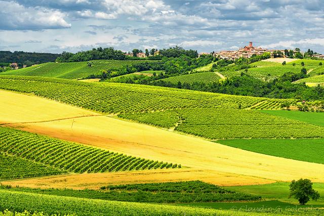 Monferrato (Italy): landscape