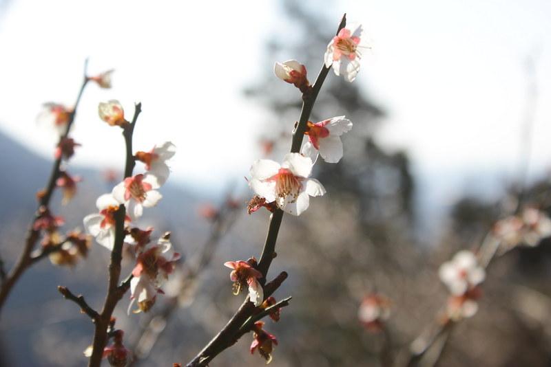 2014-03-16_00028_高松山