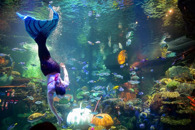 sirène show aquatique