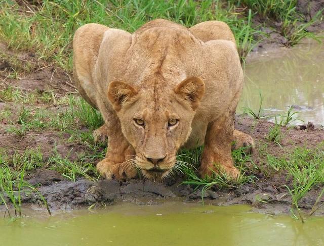Leona en Sudáfrica