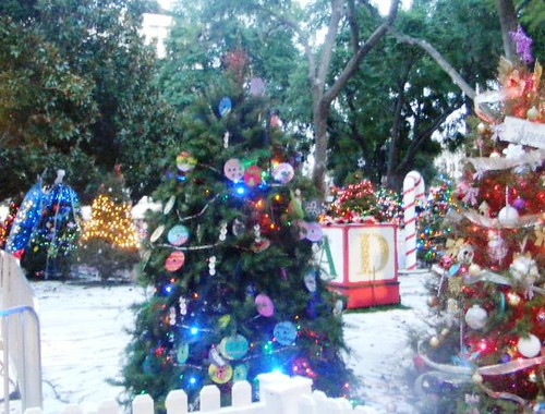 xmas trees on display