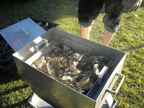 shells animals dead mud sauce knife fresh dirt heat carolina oysters alive sodium mollusc mollusk bivalve esturaine camera hot cooking oven cook steam shins thermal huitres austern estuarine seafood autumn man dinner view legs muscle hungry gross smell stinky apparatus ostras usc