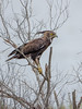 Long-crested Eagle by Gerhard Theron
