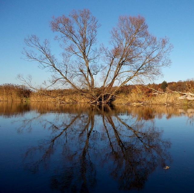 Amper, November 2014 - noch mehr Bäume