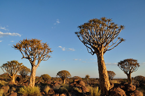 Namibia (1280)   by RX Coolpix