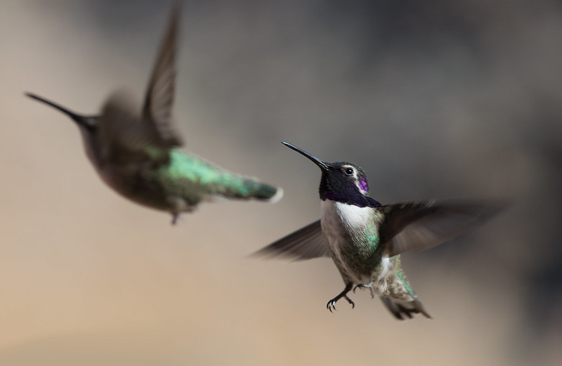 Heavy Hummingbird traffic