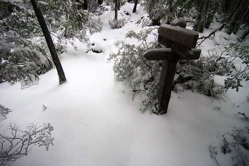 Day 5: Morning snow in Pine Valley   The Overland Track is ...