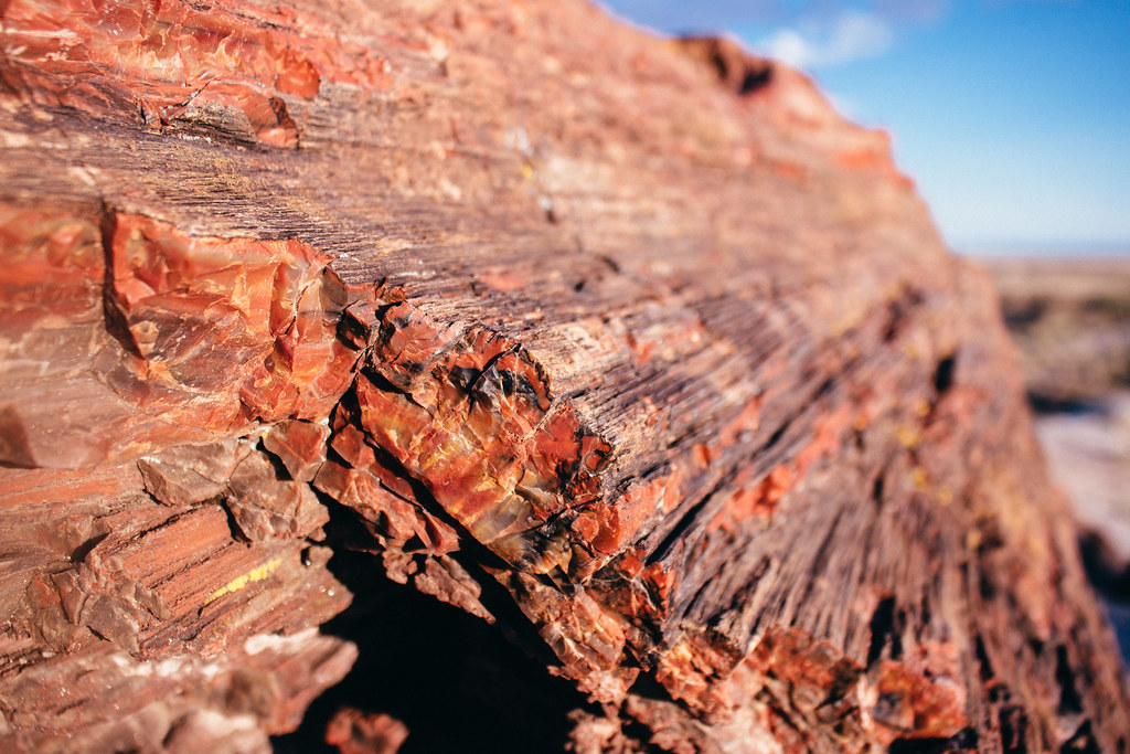 A close view of red orange and black quartz crystals on the end of a piece of petrified wood