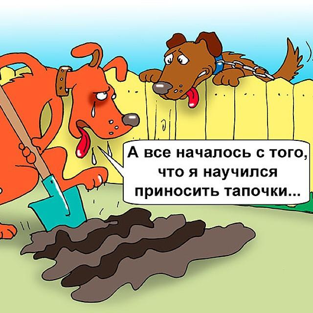Картинки шутки с собаками
