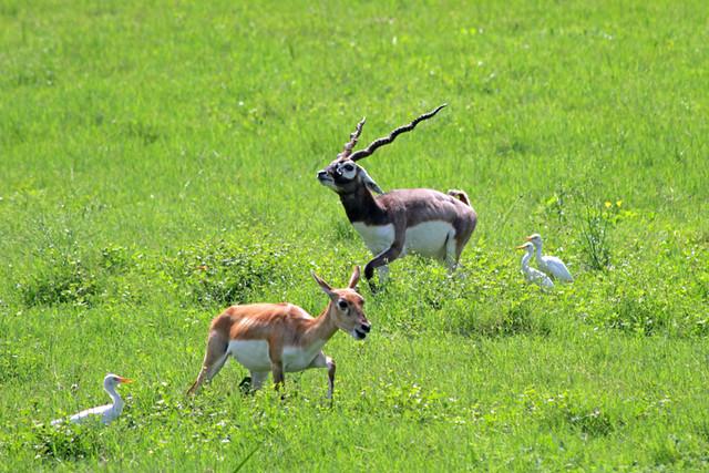 Wildlife at Sikandra fort