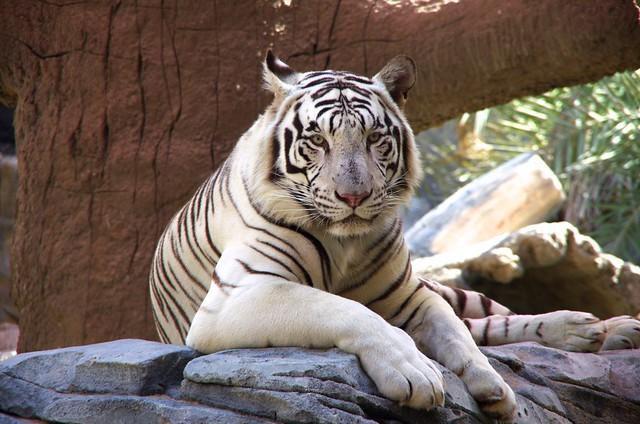 Emirates Park Zoo, Abu Dhabi, UAE