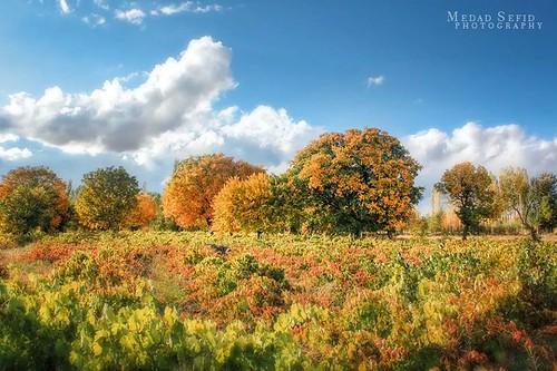 autumn sky cloud color fall nature canon colorful iran hdr پاییز irannature whitepencil abhar amirhosainsadeghian امیرحسینصادقیان مدادسفید medadsefid