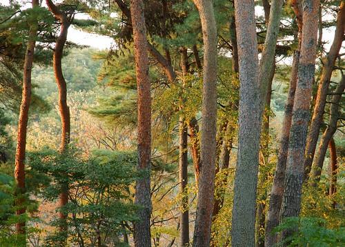 autumn japan saitama hatcho 埼玉県 東松山 japanesenature 吉見町 埼玉県の景色 八丁公園