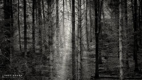 wood trees england sunlight woodland blackwhite shadows unitedkingdom sony textures sunrays wallingford shaft conifers a99 sonyalpha andyhough slta99v littlewittenhamwood andyhoughphotography