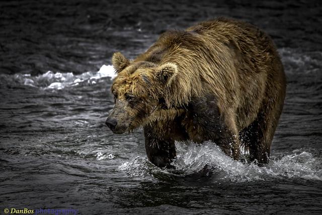 Bear Reflexion Moment