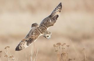 owl1 | by N.V.M.
