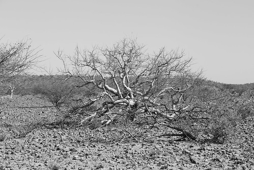 namibia afrika africa canon 6d 24105mm schwarzweiss sw bw namib wüste desert