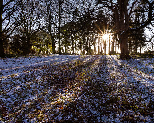 morning trees winter snow forest sunrise canon landscape woods yorkshire wakefield canon1740mmf4l canon6d woolleyhall december2014