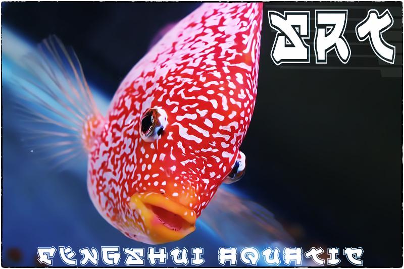 srt br fengshui aquatic thailand  