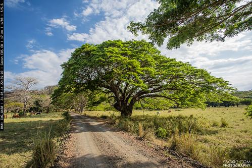 Tree of Life - Golfo de Nicoya, Costa Rica | by yago1.com