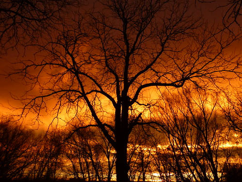 morning sky orange tree silhouette clouds sunrise colorado boulder