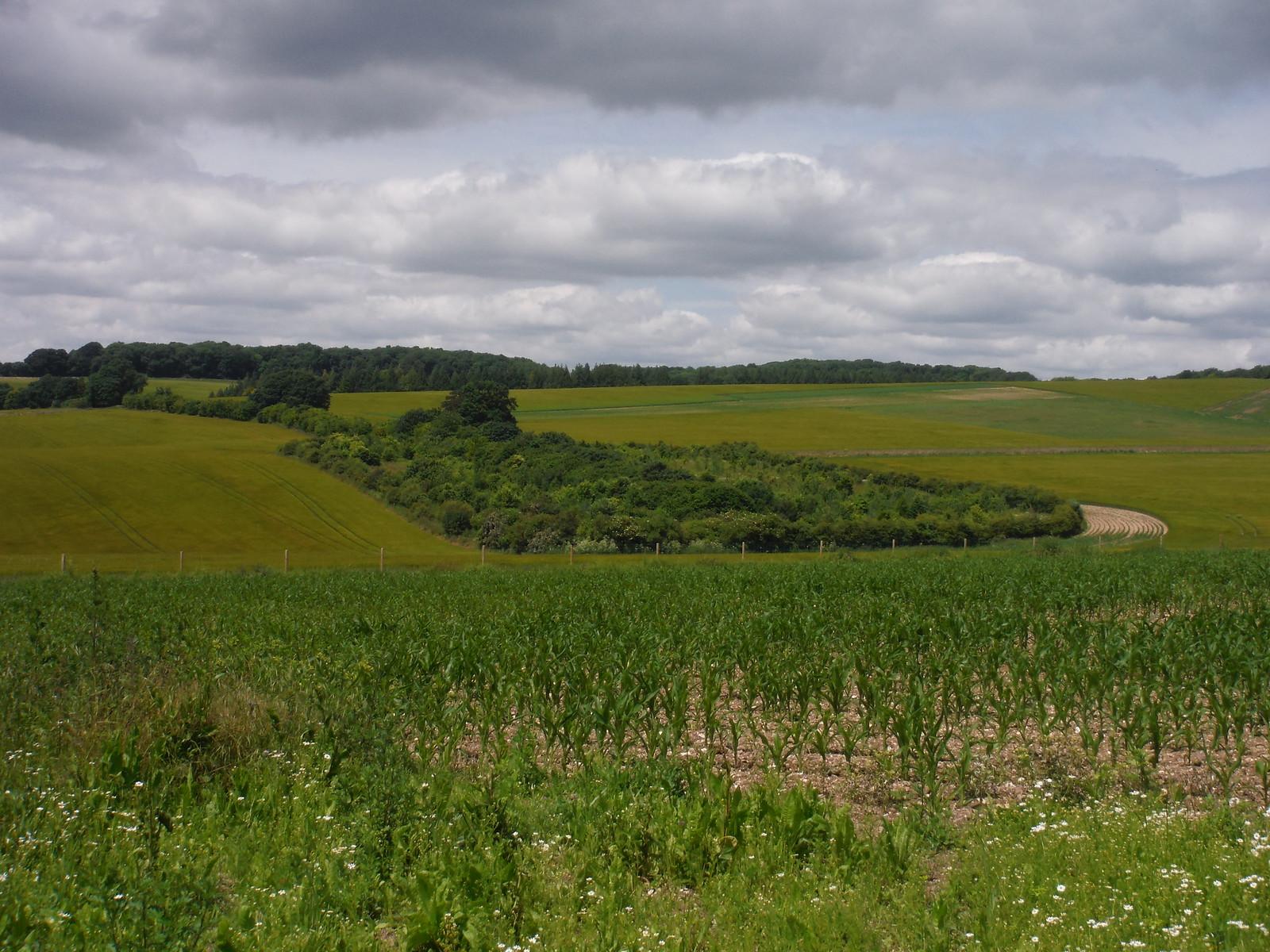 Copse in undulating field, near Broughton Down SWC Walk 265 - Dean to Mottisfont & Dunbridge