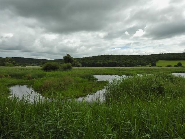 RSPB Leighton Moss Nature Reserve near Silverdale, Lancashire, England - July 2016