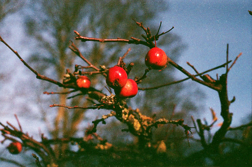 An image of crab apples.