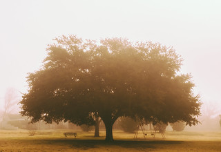The Swing Under the Great Oak Tree | by Spencereblake
