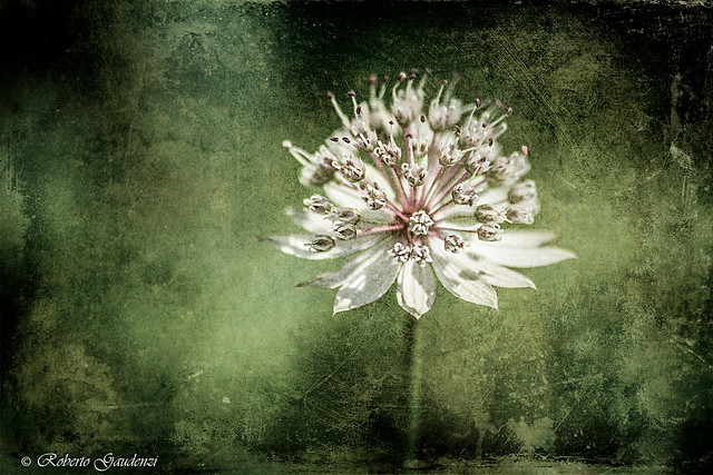 Fiore con Texture - Flower With Texture