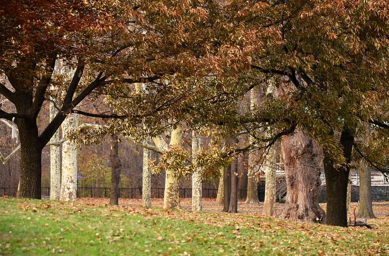 Prospect Park Trees