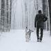 dog walker by marianna armata