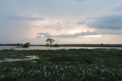 travel ceylon uva uvaprovince wetlands srilanka grasslands southasia asia lake weerawilalake outdoor landscape hyacinth water sky sunset dnysmphotography dnysmsmugmugcom