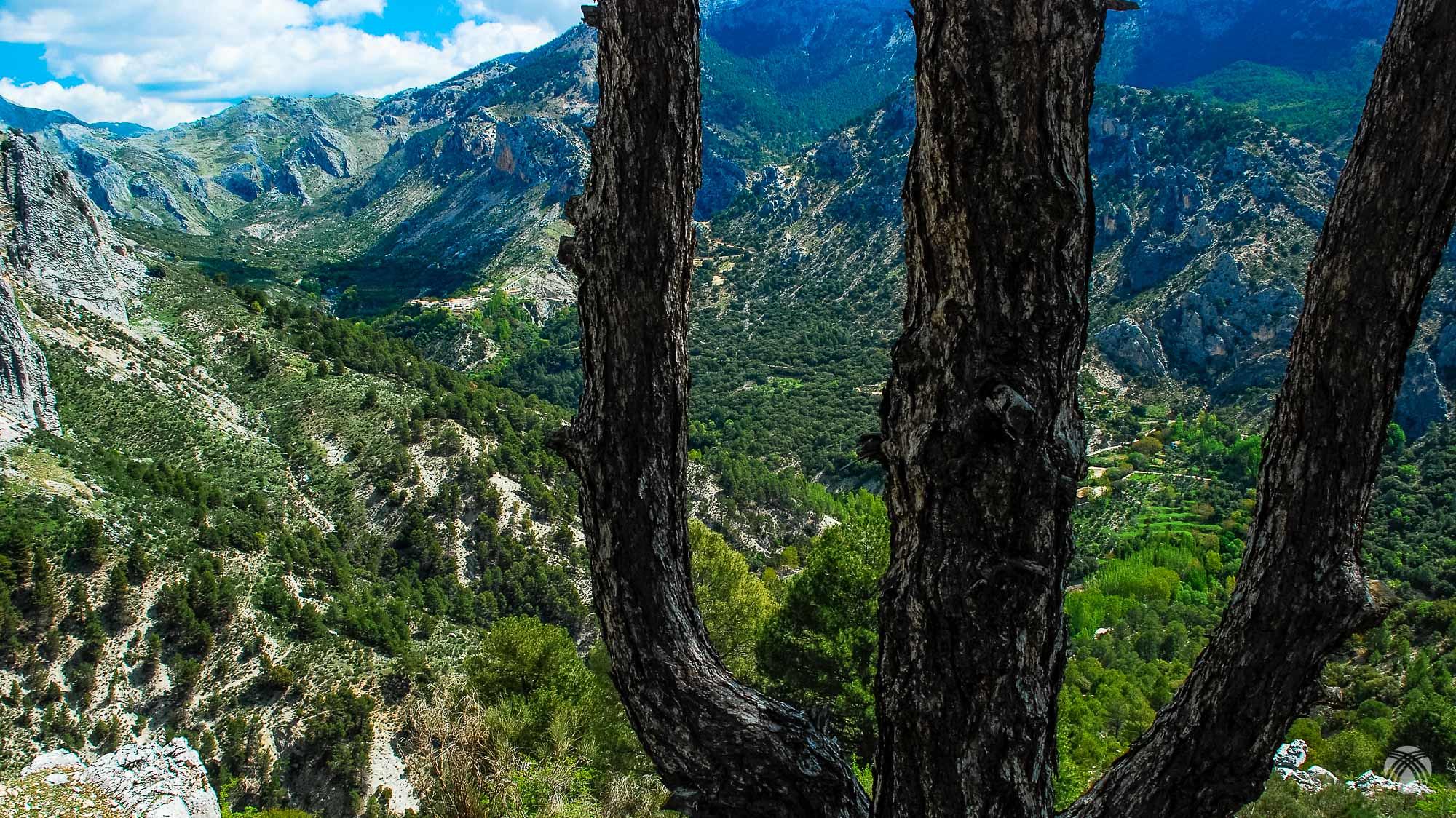 Pino característico y el valle de Castril