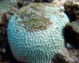 Coral Bleaching | by NOAA's National Ocean Service