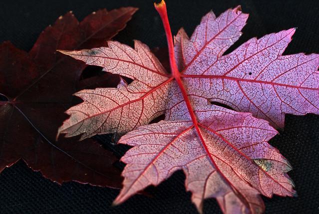 Leaf_045