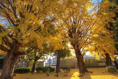 IMG_0079_81 上野恩賜公園 HDR
