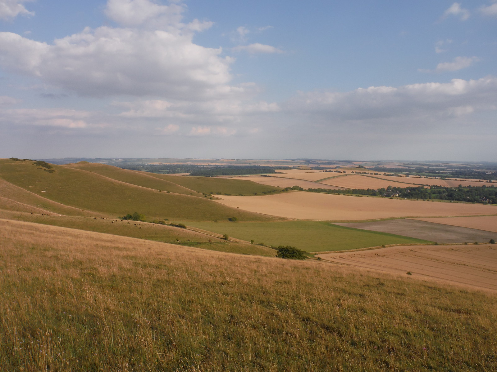 Along Walkers Hill SWC Walk 255 Pewsey or Marlborough Circular via Avebury