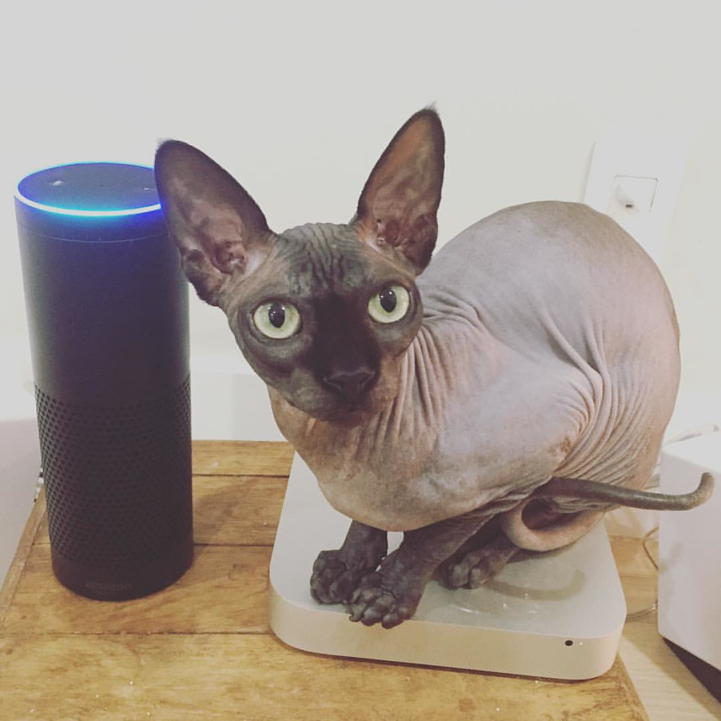 #CarbonCat and #Alexa the  #AmazonEcho, mixed feels for the #TechCat