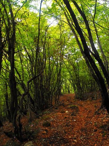 trees mountain mountains green forest village greece vergina pierian